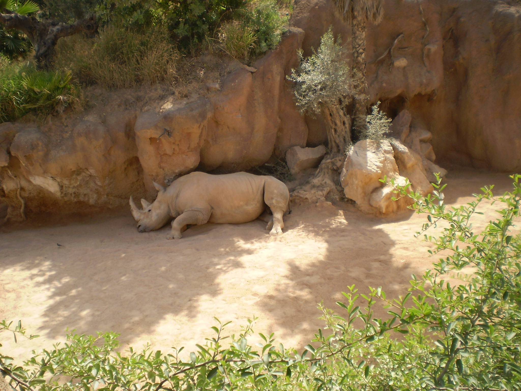Days Out From Jávea – Bioparc Valencia – Javea Vacation