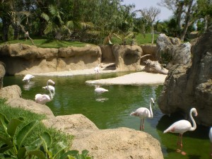 Bioparc-valencia-Flamencos